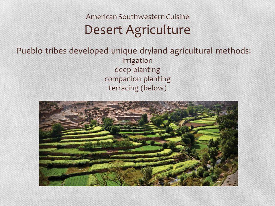 American Southwestern Cuisine Desert Agriculture Pueblo tribes developed unique dryland agricultural methods: irrigation deep planting companion plant
