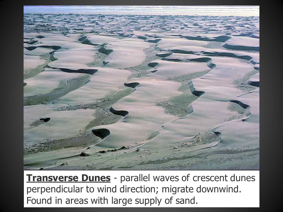 Transverse Dunes - parallel waves of crescent dunes perpendicular to wind direction; migrate downwind. Found in areas with large supply of sand.