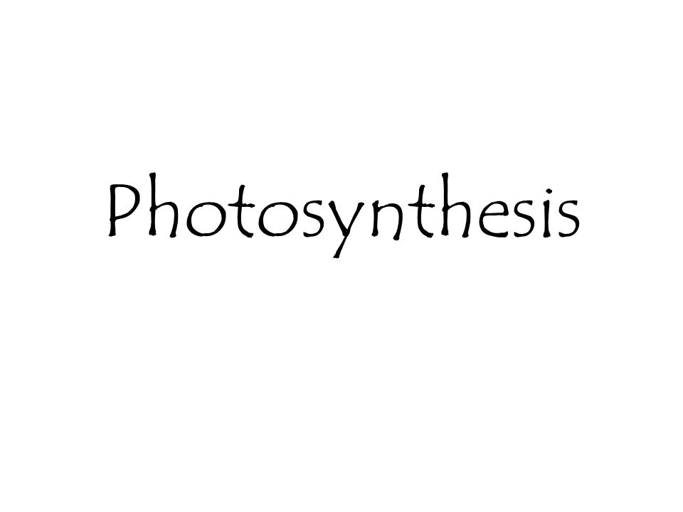 Importance of Photosynthesis 1.Photosynthesis makes chemical energy available to animals Sunlight  Plants  Animals 2.Photosynthesis removes carbon dioxide and provides oxygen 3.Energy is stored in coal through photosynthesis Coal is formed from trees which contain a store of energy (starch) obtained from sunlight