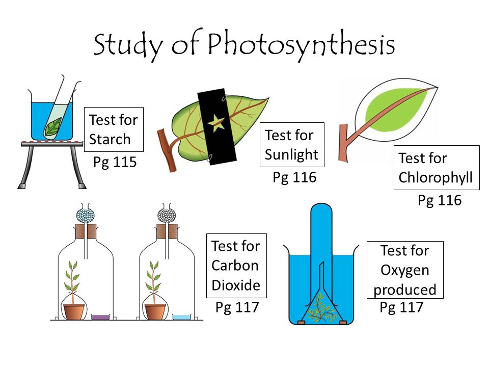 Study of Photosynthesis Test for Starch Test for Sunlight Test for Chlorophyll Test for Carbon Dioxide Pg 115 Pg 117 Pg 116 Test for Oxygen produced P