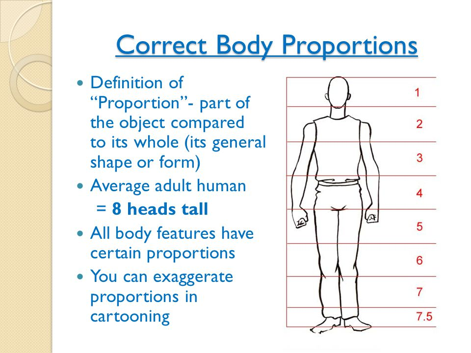 Correct Body Proportions Definition of Proportion - part of the object compared to its whole (its general shape or form) Average adult human = 8 heads tall All body features have certain proportions You can exaggerate proportions in cartooning