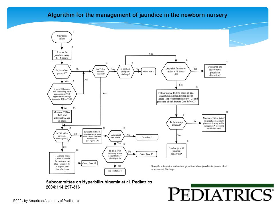 Algorithm for the management of jaundice in the newborn nursery Subcommittee on Hyperbilirubinemia et al. Pediatrics 2004;114:297-316 ©2004 by America
