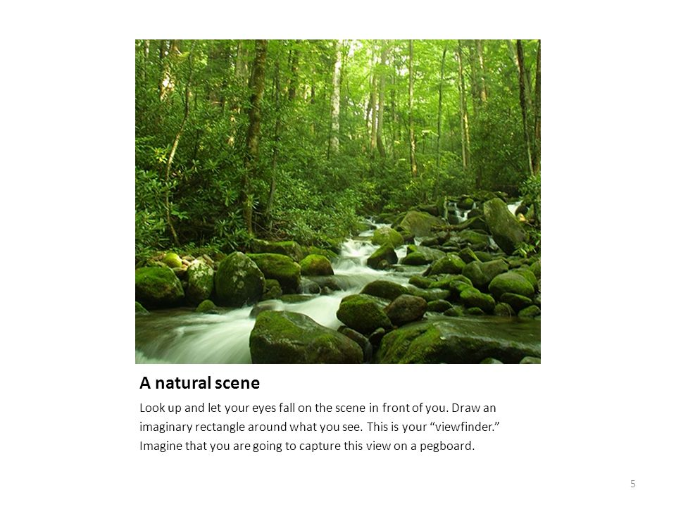 """A natural scene Look up and let your eyes fall on the scene in front of you. Draw an imaginary rectangle around what you see. This is your """"viewfinder"""