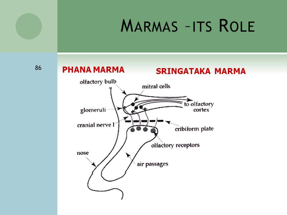 M ARMAS – ITS R OLE 86 PHANA MARMA SRINGATAKA MARMA