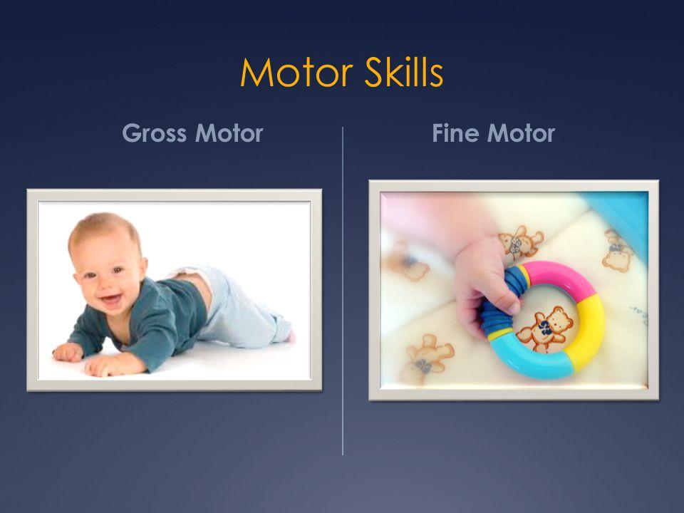 Motor Skills Gross Motor Fine Motor