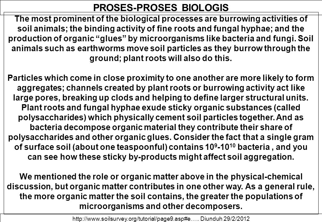 PROSES-PROSES BIOLOGIS The most prominent of the biological processes are burrowing activities of soil animals; the binding activity of fine roots and