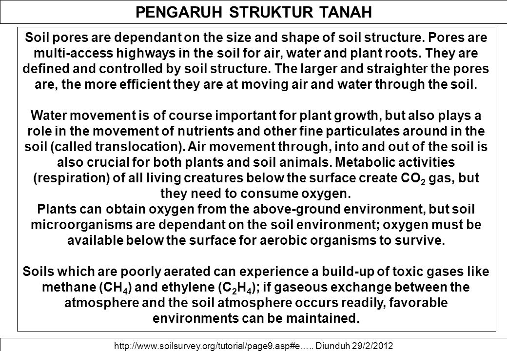 PENGARUH STRUKTUR TANAH Soil pores are dependant on the size and shape of soil structure. Pores are multi-access highways in the soil for air, water a