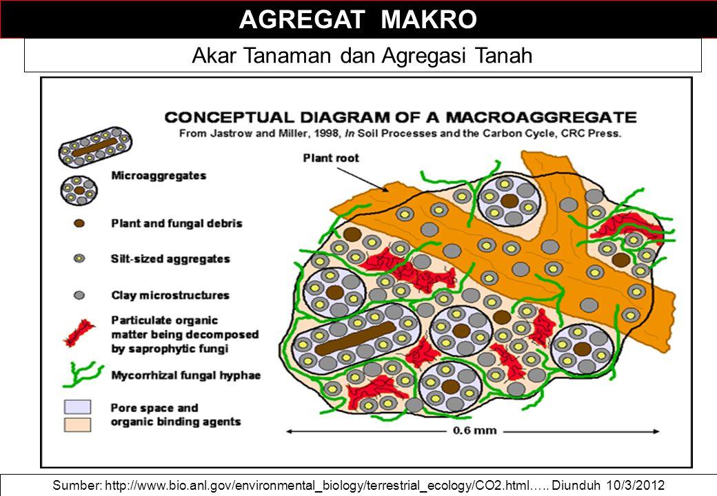 AGREGAT MAKRO Sumber: http://www.bio.anl.gov/environmental_biology/terrestrial_ecology/CO2.html…..