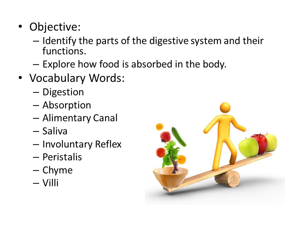 Objective: – Identify the parts of the digestive system and their functions.