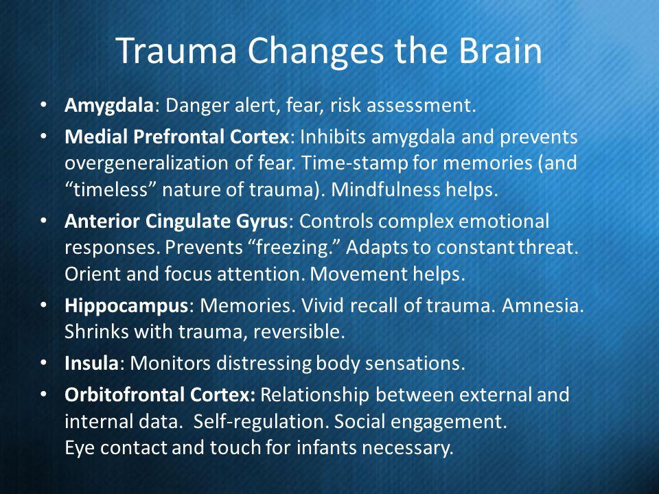 Trauma Changes the Brain Amygdala: Danger alert, fear, risk assessment. Medial Prefrontal Cortex: Inhibits amygdala and prevents overgeneralization of