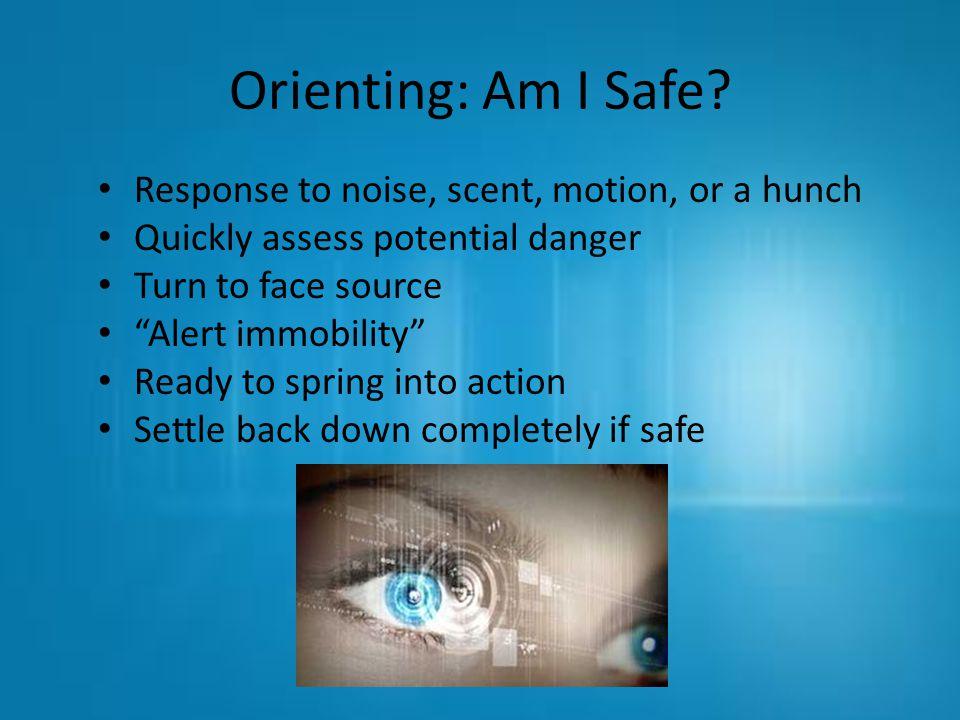 Orienting: Am I Safe.