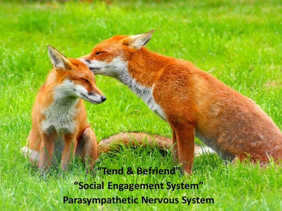 """""""Tend & Befriend"""" """"Social Engagement System"""" Parasympathetic Nervous System"""