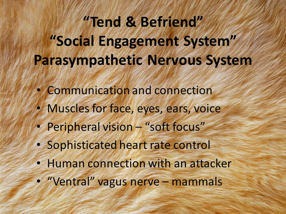 Tend & Befriend Social Engagement System Parasympathetic Nervous System Communication and connection Muscles for face, eyes, ears, voice Peripheral vision – soft focus Sophisticated heart rate control Human connection with an attacker Ventral vagus nerve – mammals