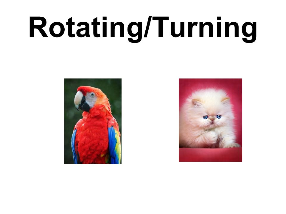 Rotating/Turning