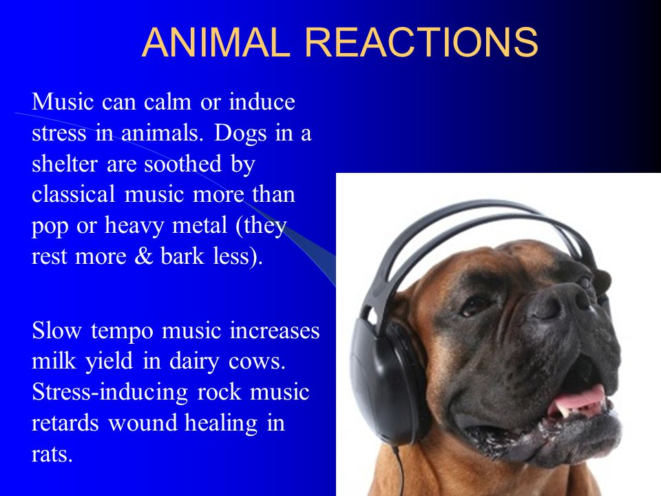 ANIMAL REACTIONS Music can calm or induce stress in animals. Dogs in a shelter are soothed by classical music more than pop or heavy metal (they rest