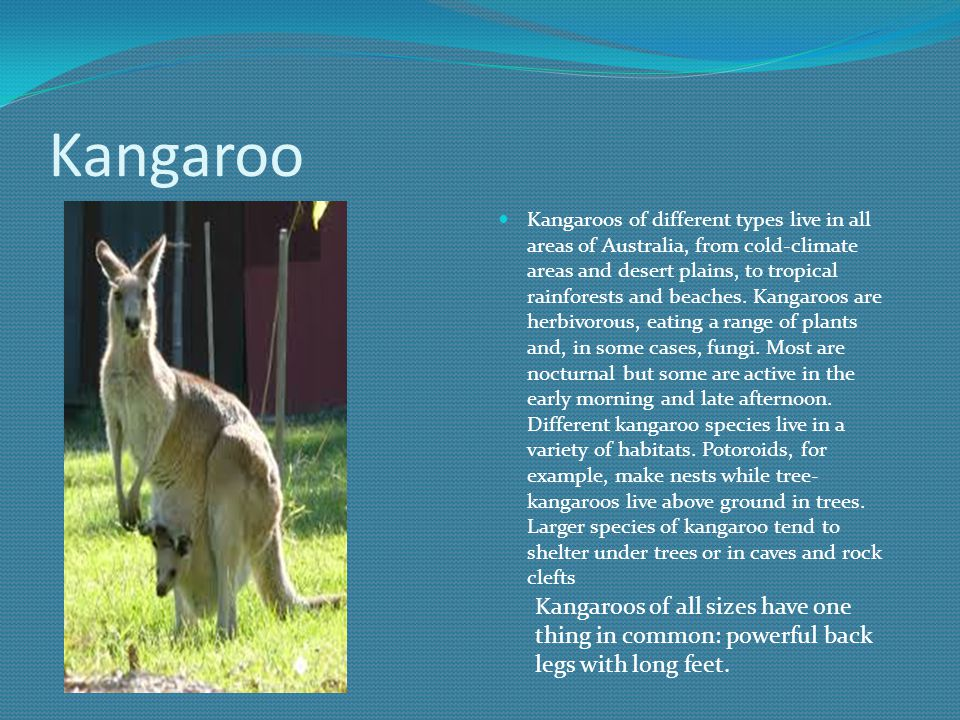 Kangaroo Kangaroos of different types live in all areas of Australia, from cold-climate areas and desert plains, to tropical rainforests and beaches.