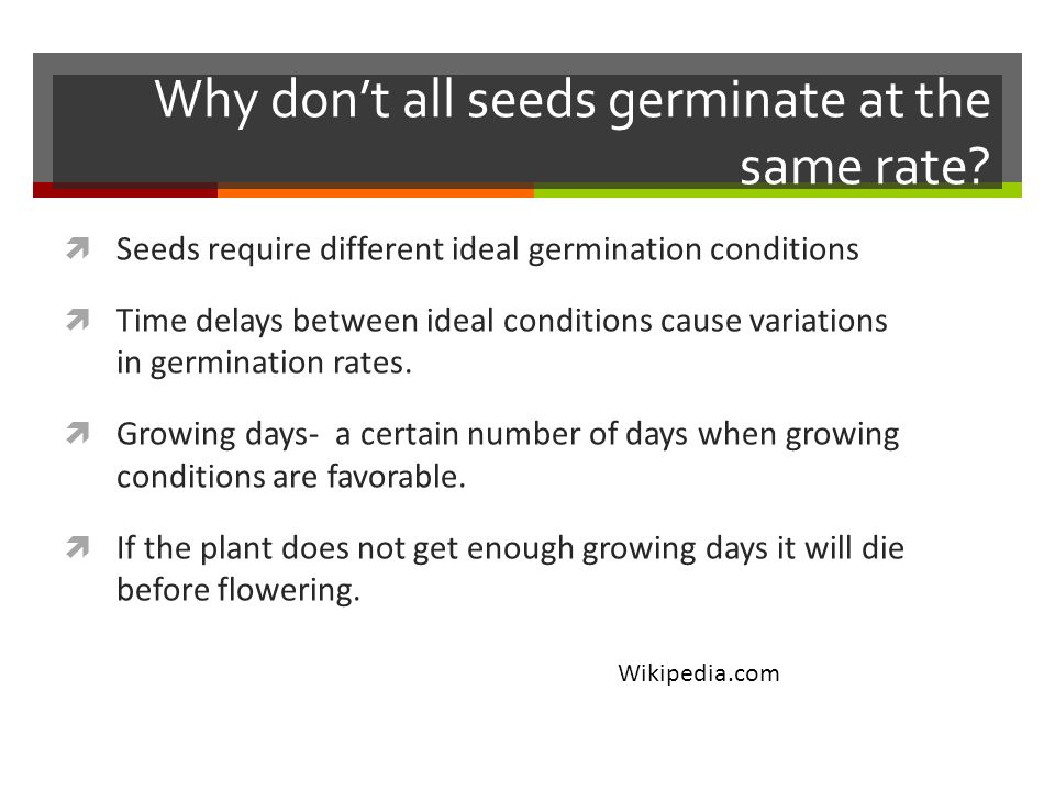 Why don't all seeds germinate at the same rate.
