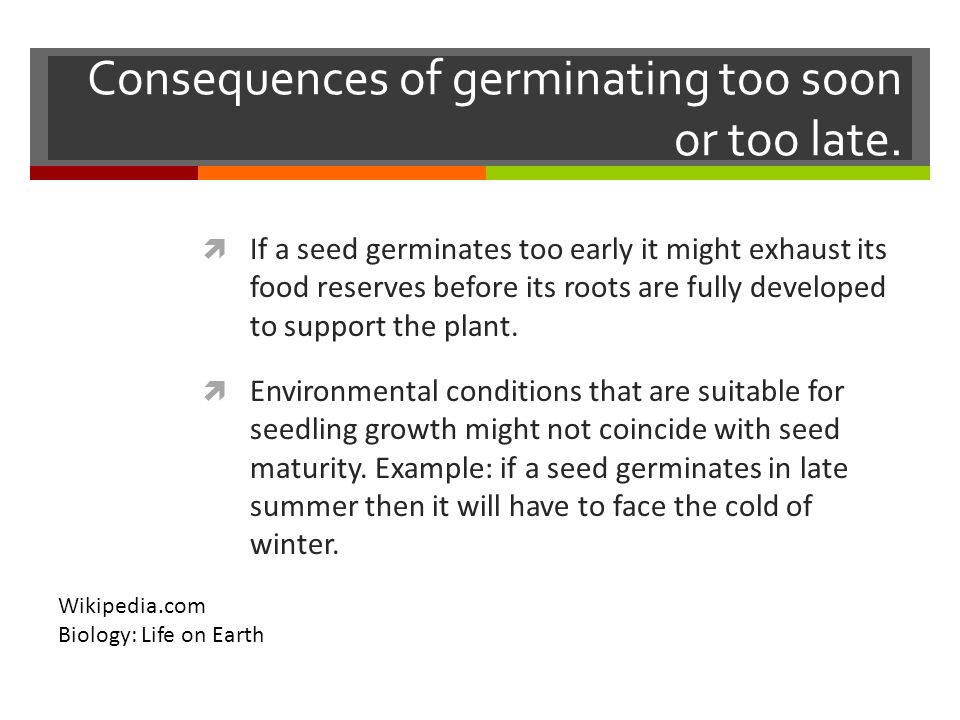 Consequences of germinating too soon or too late.