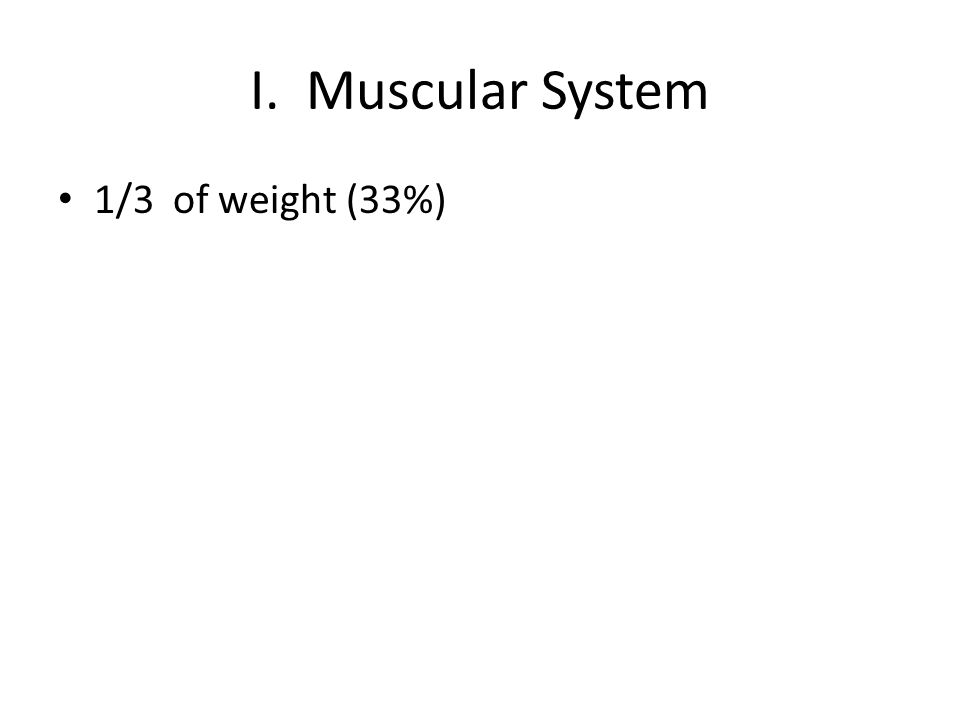 I. Muscular System 1/3 of weight (33%)