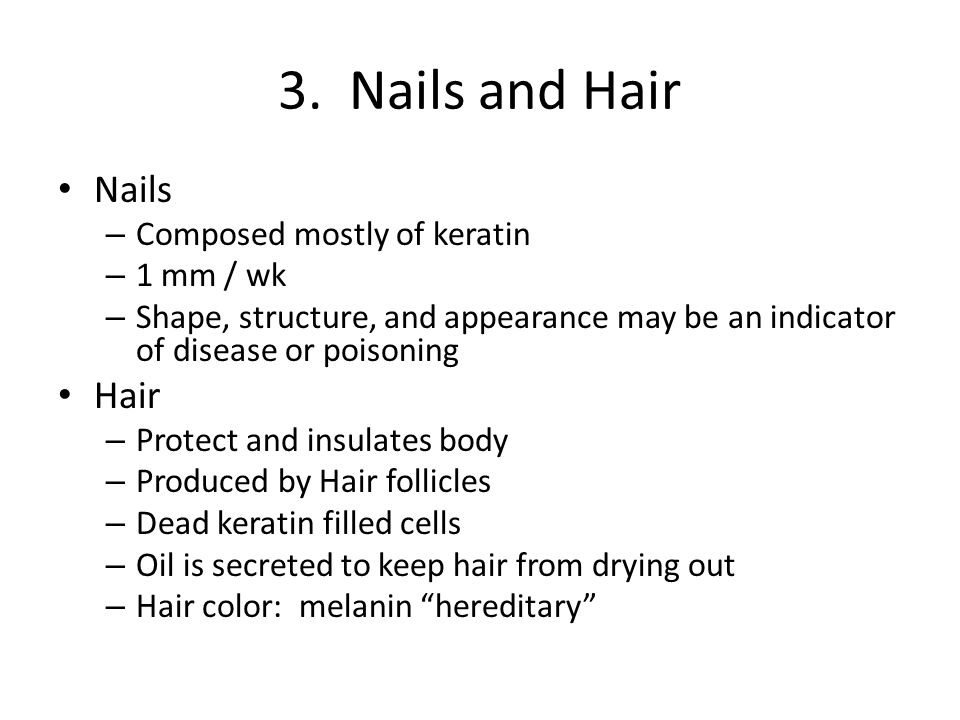 3. Nails and Hair Nails – Composed mostly of keratin – 1 mm / wk – Shape, structure, and appearance may be an indicator of disease or poisoning Hair –