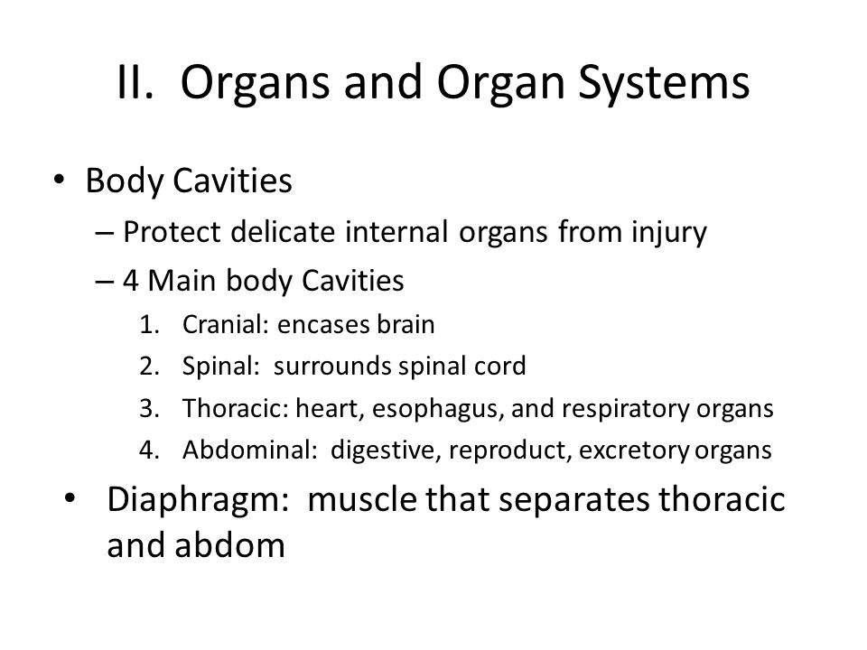 II. Organs and Organ Systems Body Cavities – Protect delicate internal organs from injury – 4 Main body Cavities 1.Cranial: encases brain 2.Spinal: su
