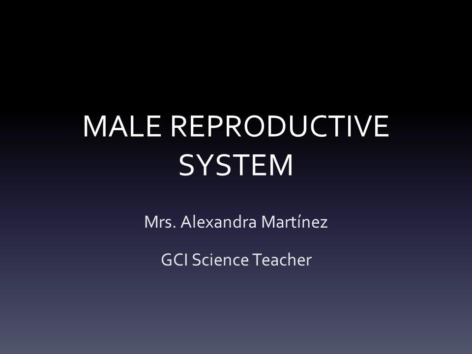 MALE REPRODUCTIVE SYSTEM Mrs. Alexandra Martínez GCI Science Teacher