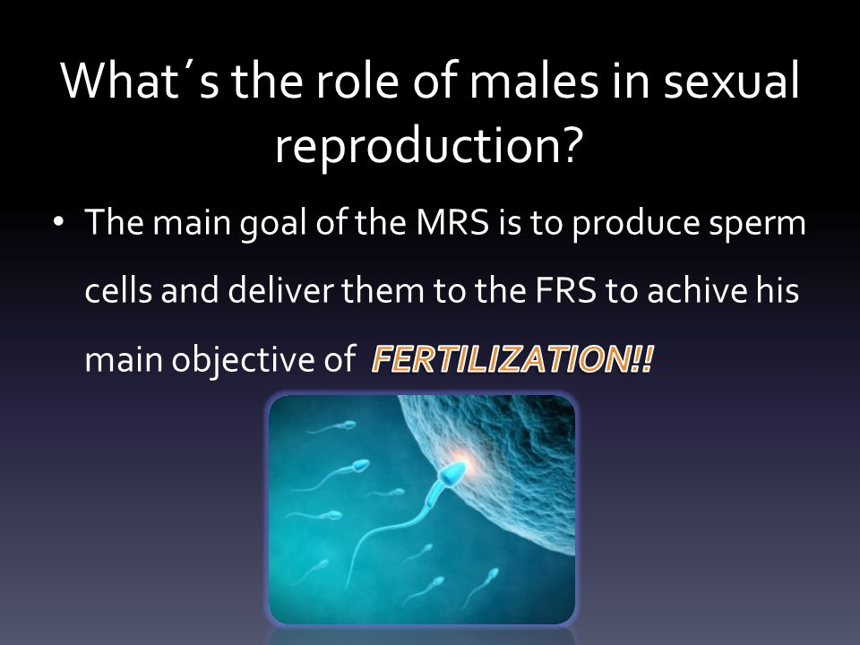 What´s the role of males in sexual reproduction?