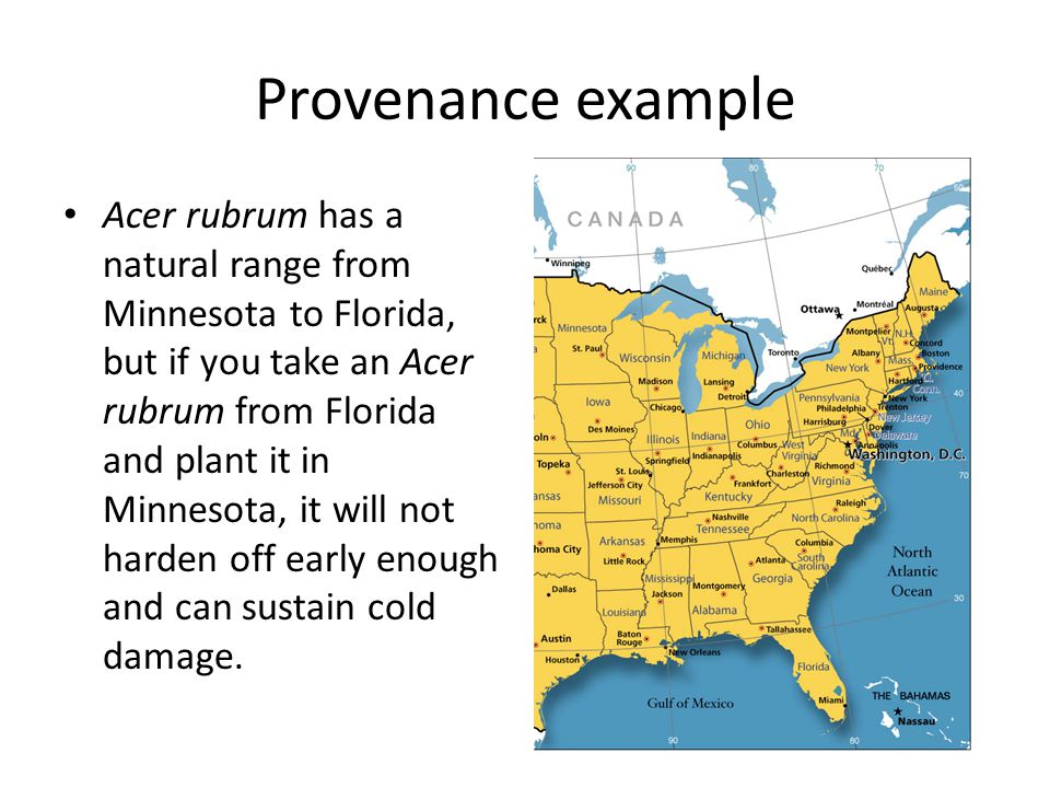 Provenance example Acer rubrum has a natural range from Minnesota to Florida, but if you take an Acer rubrum from Florida and plant it in Minnesota, it will not harden off early enough and can sustain cold damage.