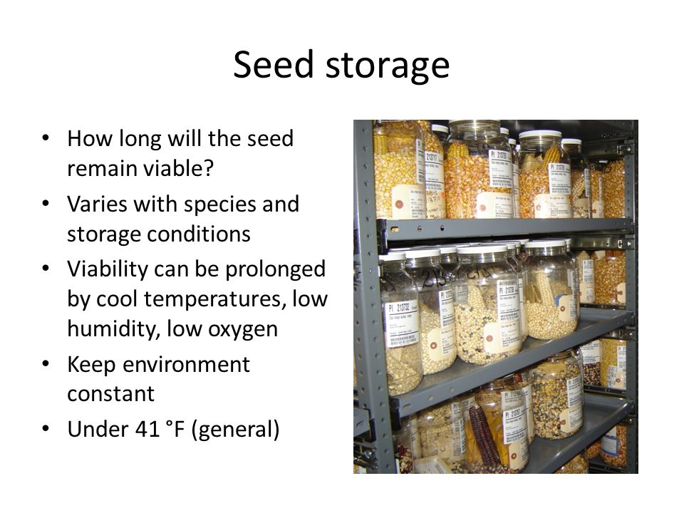 Seed storage How long will the seed remain viable.