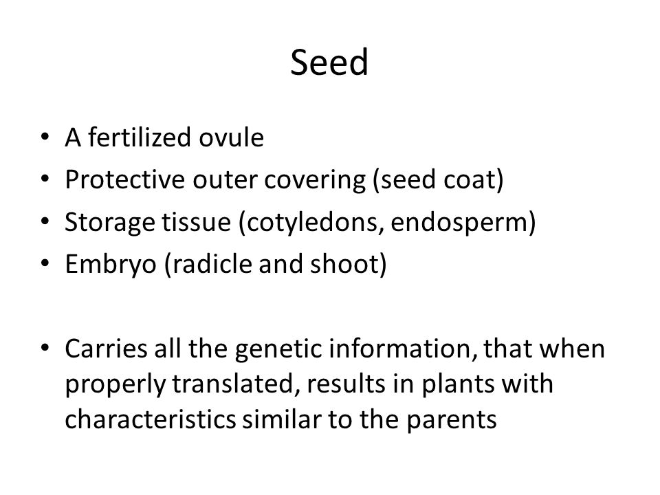 Seed A fertilized ovule Protective outer covering (seed coat) Storage tissue (cotyledons, endosperm) Embryo (radicle and shoot) Carries all the geneti