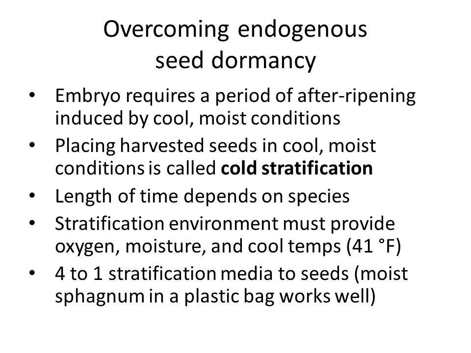 Overcoming endogenous seed dormancy Embryo requires a period of after-ripening induced by cool, moist conditions Placing harvested seeds in cool, mois