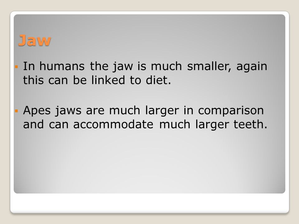 Jaw  In humans the jaw is much smaller, again this can be linked to diet.