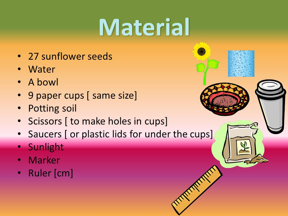 27 sunflower seeds Water A bowl 9 paper cups [ same size] Potting soil Scissors [ to make holes in cups] Saucers [ or plastic lids for under the cups] Sunlight Marker Ruler [cm]