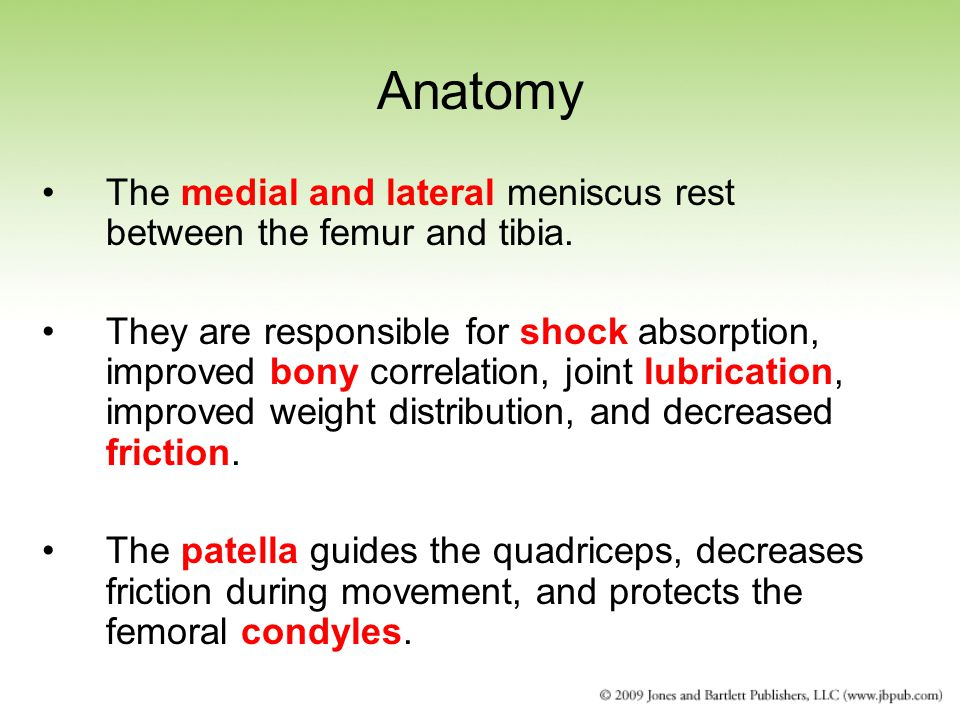 Anatomy The medial and lateral meniscus rest between the femur and tibia.
