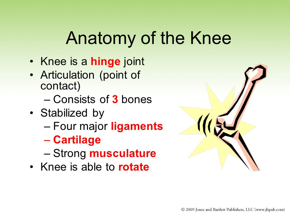 Anatomy of the Knee Knee is a hinge joint Articulation (point of contact) –Consists of 3 bones Stabilized by –Four major ligaments –Cartilage –Strong musculature Knee is able to rotate