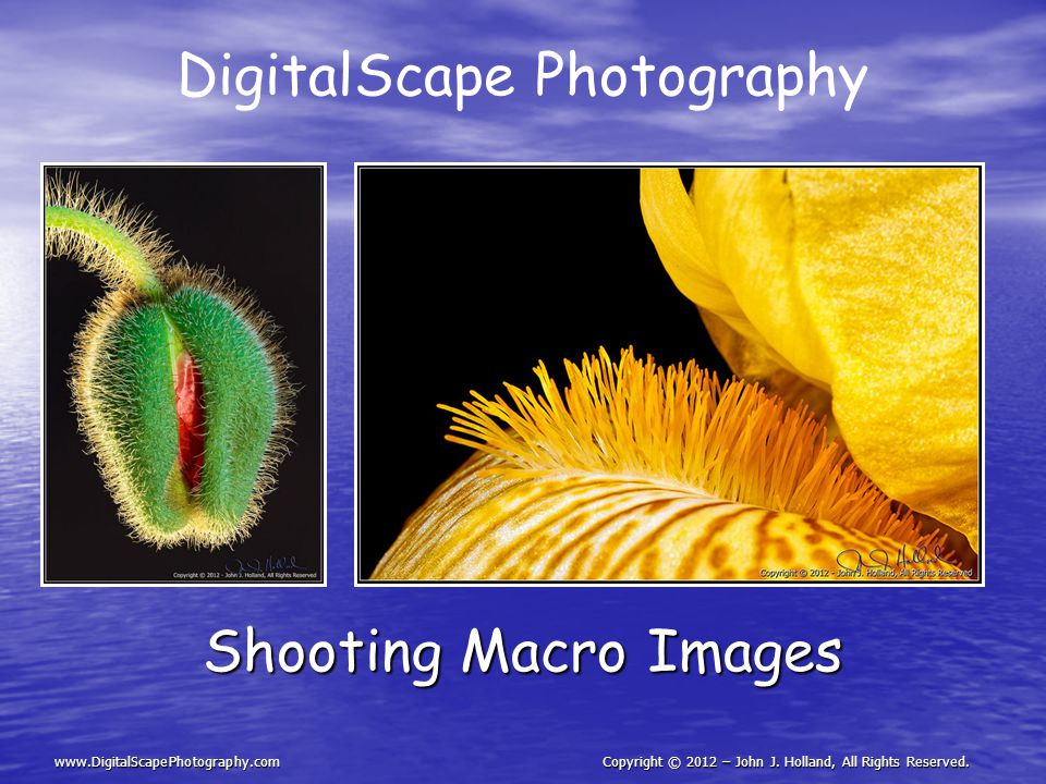 DigitalScape Photography Shooting Macro Images www.DigitalScapePhotography.comCopyright © 2012 – John J.
