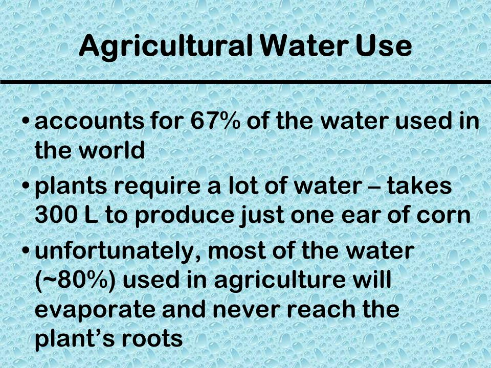 Agricultural Water Use accounts for 67% of the water used in the world plants require a lot of water – takes 300 L to produce just one ear of corn unfortunately, most of the water (~80%) used in agriculture will evaporate and never reach the plant's roots