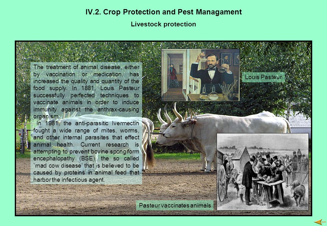 IV.2. Crop Protection and Pest Managament Livestock protection The treatment of animal disease, either by vaccination or medication, has increased the