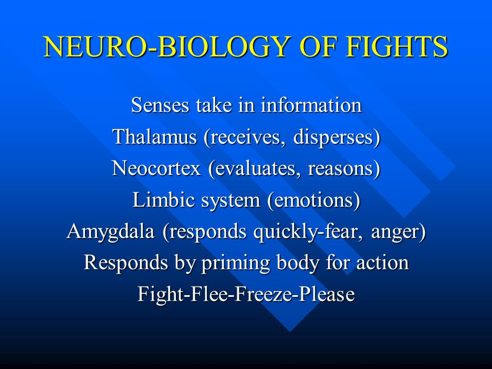 NEURO-BIOLOGY OF FIGHTS Senses take in information Thalamus (receives, disperses) Neocortex (evaluates, reasons) Limbic system (emotions) Amygdala (re
