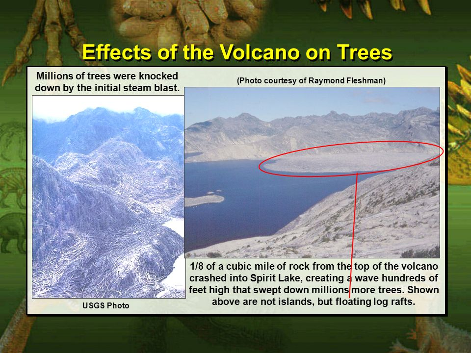 Effects of the Volcano on Trees Millions of trees were knocked down by the initial steam blast.