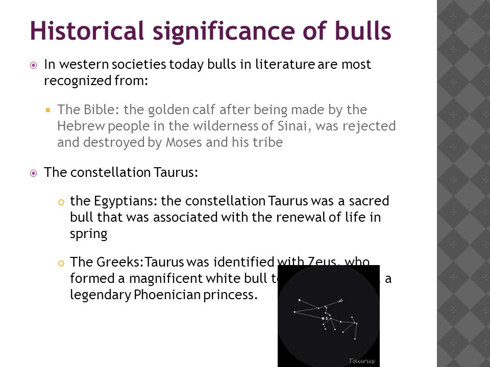 Historical significance of bulls  In western societies today bulls in literature are most recognized from:  The Bible: the golden calf after being made by the Hebrew people in the wilderness of Sinai, was rejected and destroyed by Moses and his tribe  The constellation Taurus: the Egyptians: the constellation Taurus was a sacred bull that was associated with the renewal of life in spring The Greeks:Taurus was identified with Zeus, who formed a magnificent white bull to abduct Europa, a legendary Phoenician princess.