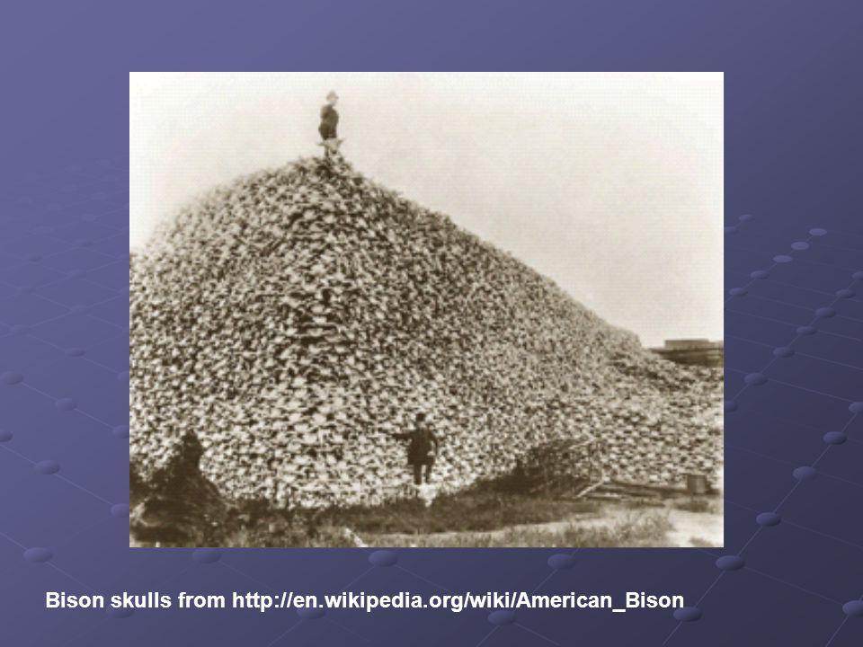 Bison skulls from http://en.wikipedia.org/wiki/American_Bison