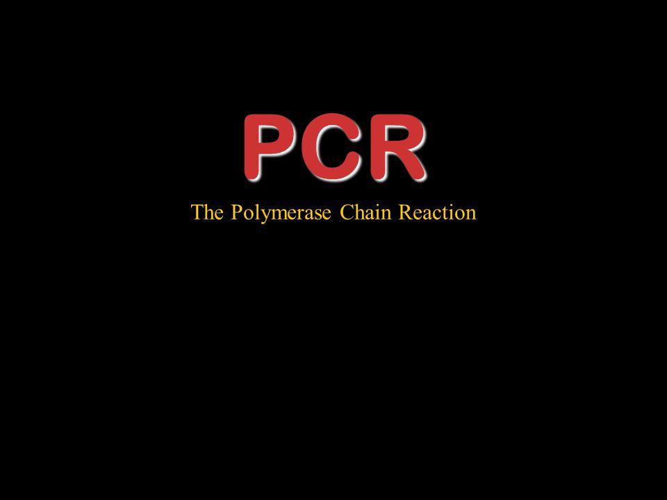 PCR The Polymerase Chain Reaction Let's Take a Break