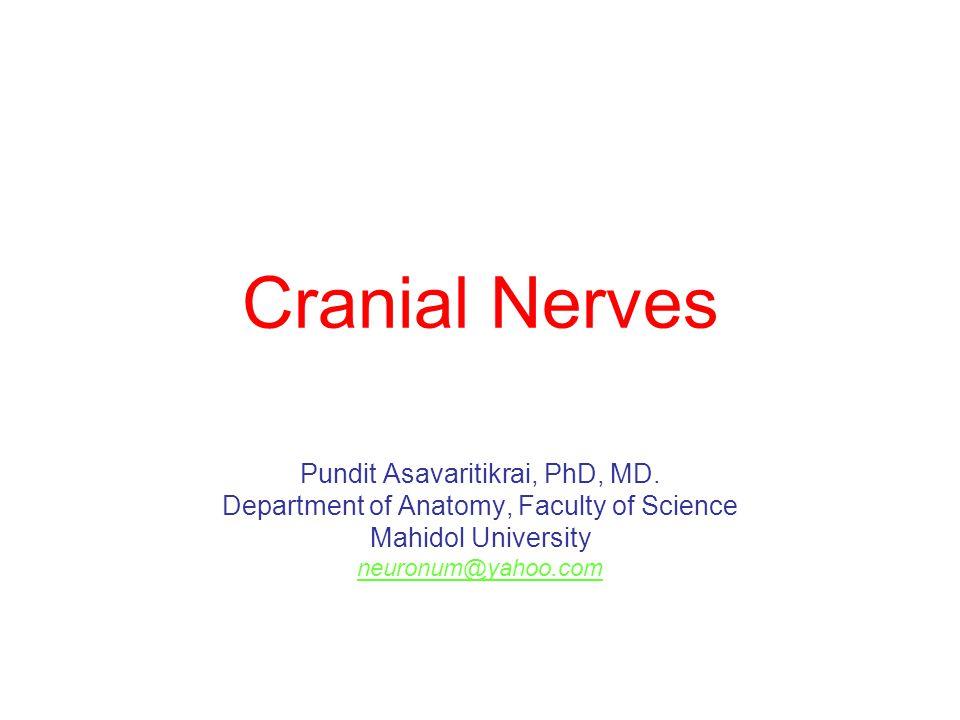 Cranial Nerves Pundit Asavaritikrai, PhD, MD. Department of Anatomy, Faculty of Science Mahidol University neuronum@yahoo.com