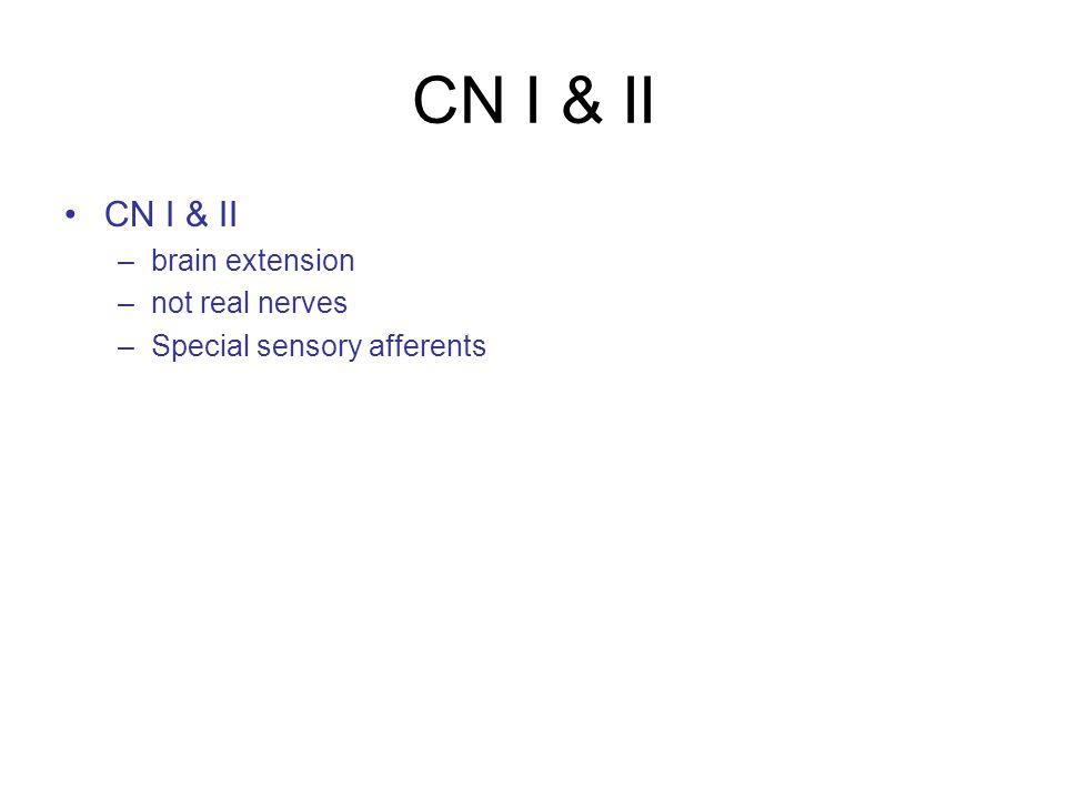 CN I & II –brain extension –not real nerves –Special sensory afferents
