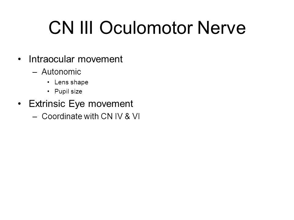 CN III Oculomotor Nerve Intraocular movement –Autonomic Lens shape Pupil size Extrinsic Eye movement –Coordinate with CN IV & VI
