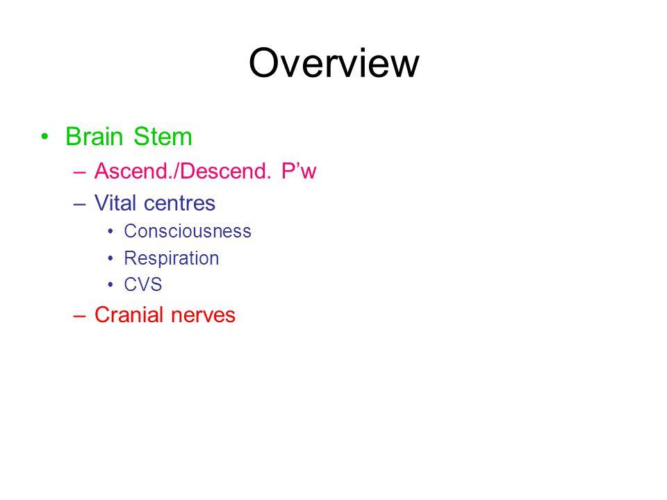 Overview Brain Stem –Ascend./Descend. P'w –Vital centres Consciousness Respiration CVS –Cranial nerves