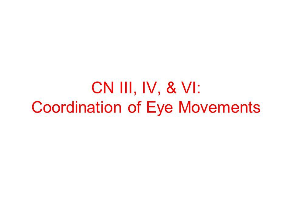 CN III, IV, & VI: Coordination of Eye Movements