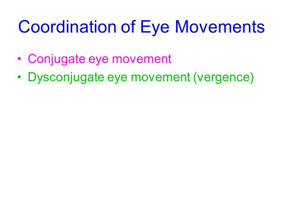 Coordination of Eye Movements Conjugate eye movement Dysconjugate eye movement (vergence)