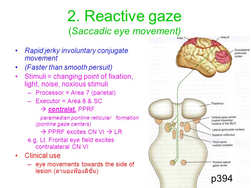 2. Reactive gaze (Saccadic eye movement) Rapid jerky involuntary conjugate movement (Faster than smooth persuit) Stimuli = changing point of fixation,